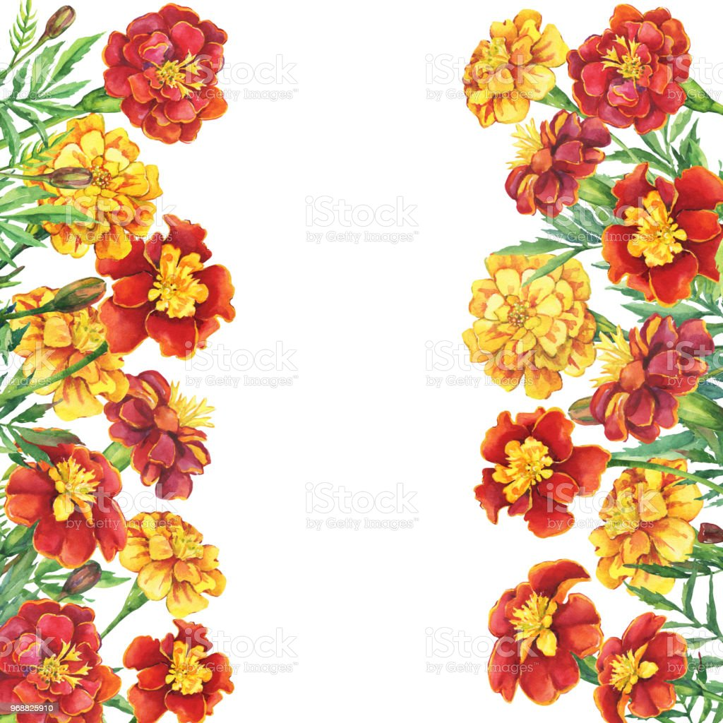 Rahmen Aus Roten Gelben Blüten Tagetes Patula Die Französische ...