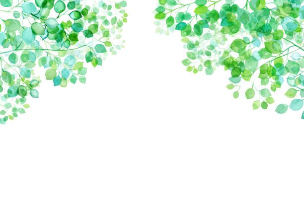 illustrazioni stock, clip art, cartoni animati e icone di tendenza di frame of fresh green leaves shed in sunlight, watercolor illustration - forest bathing