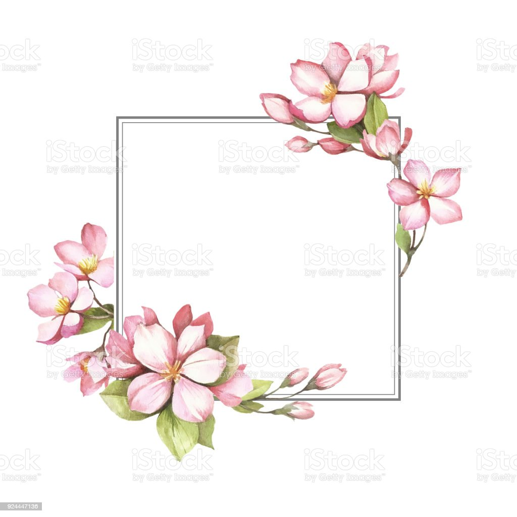 frame with the cherry blossoms hand draw watercolor illustration