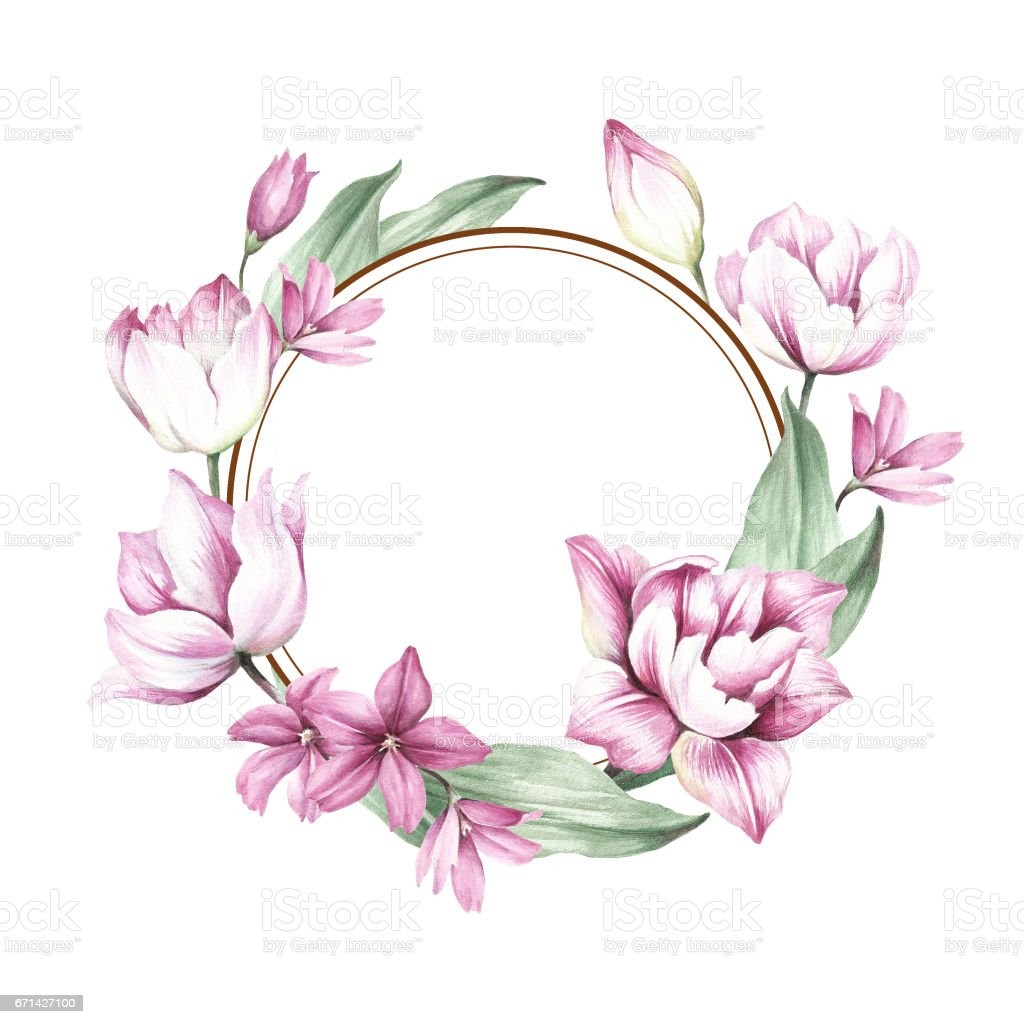 frame with tulips hand draw watercolor illustration royalty free stock vector art