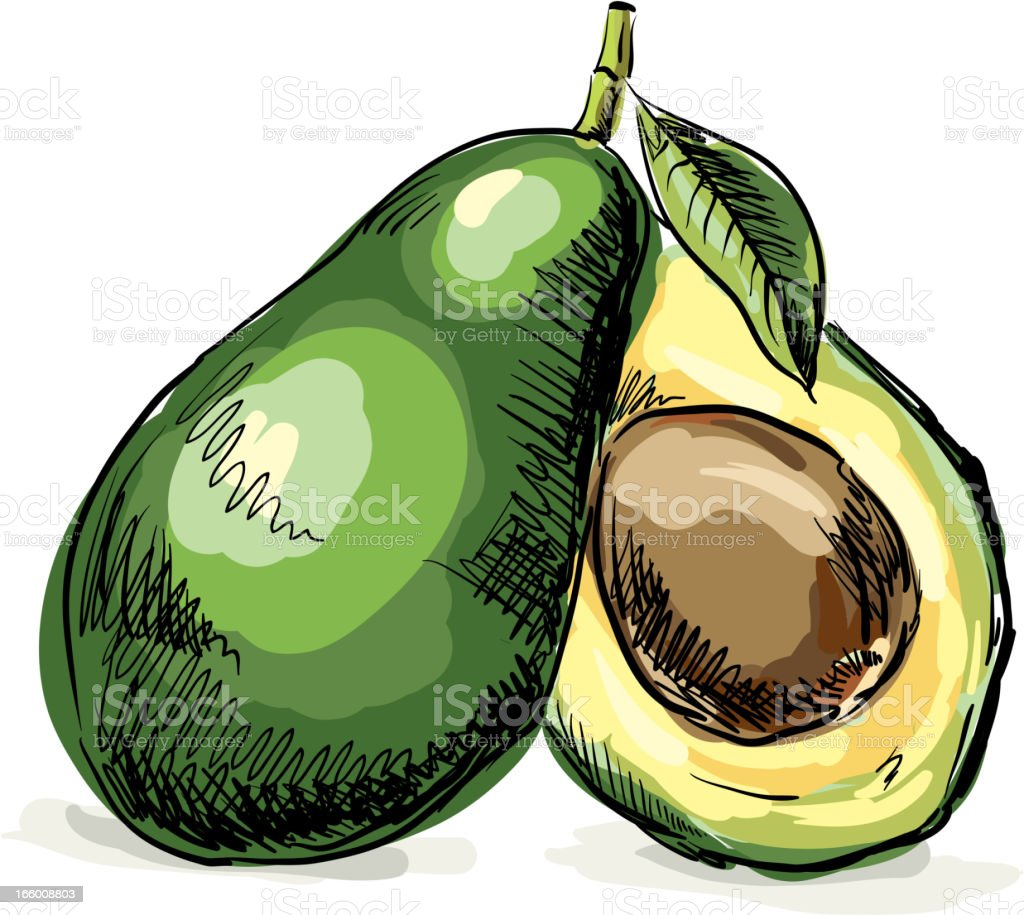 Fresh Avocado vector art illustration