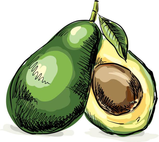 Fresh Avocado vector art illustration