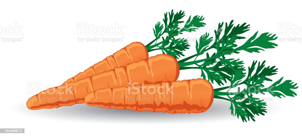 Fresh Carrots vector art illustration
