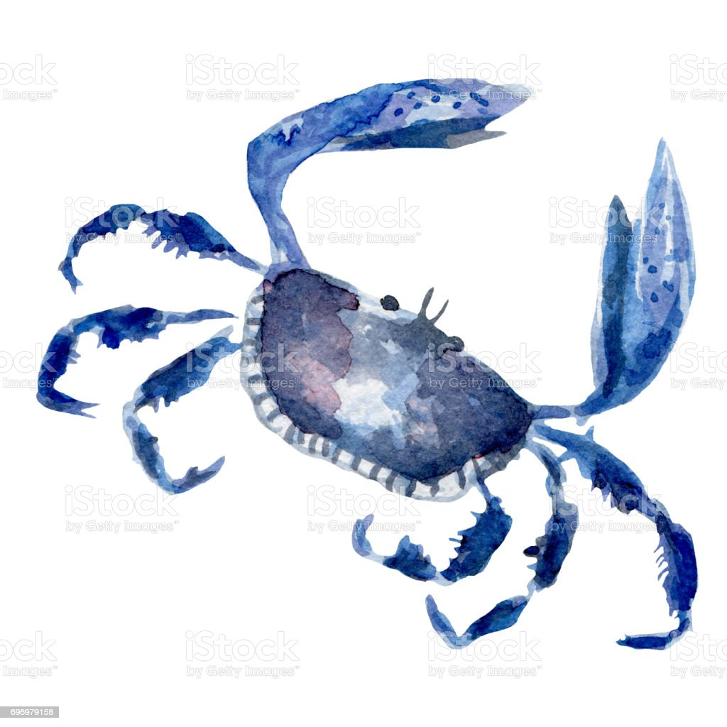 royalty free maryland crabs clip art vector images illustrations rh istockphoto com maryland blue crab clipart maryland blue crab clipart