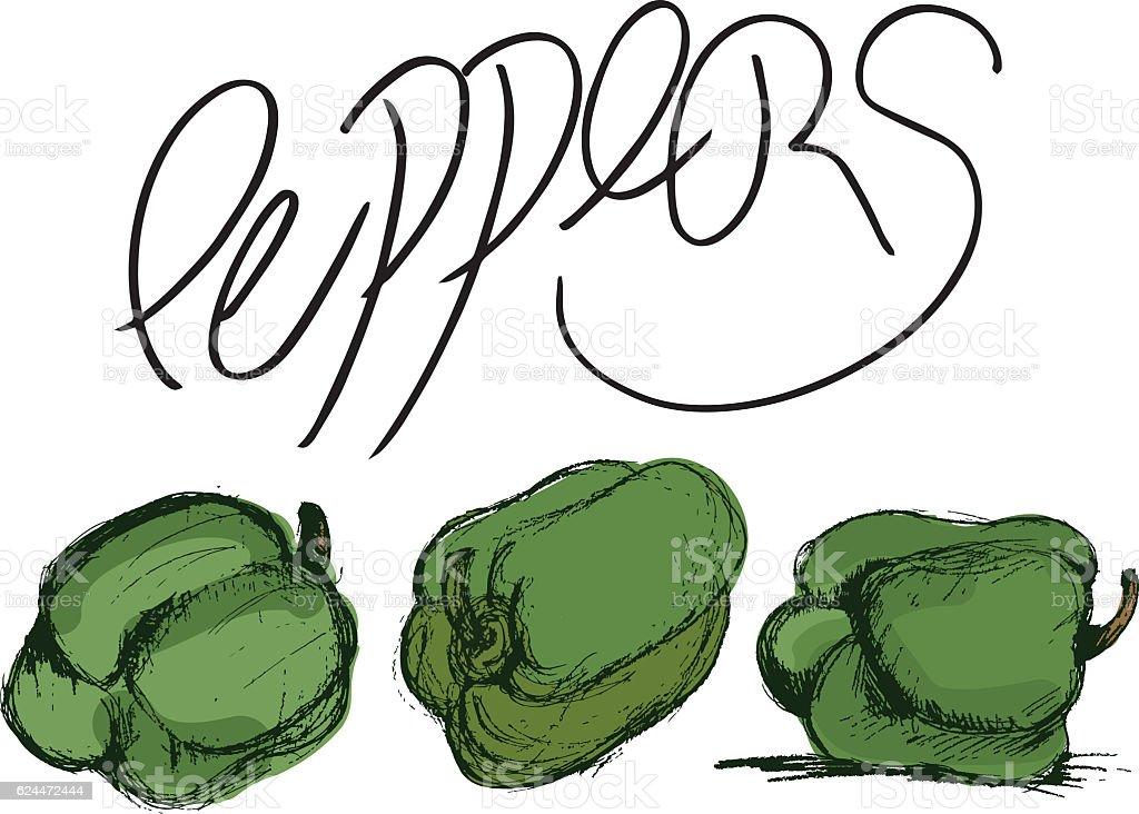 Fresh Green Peppers vector art illustration
