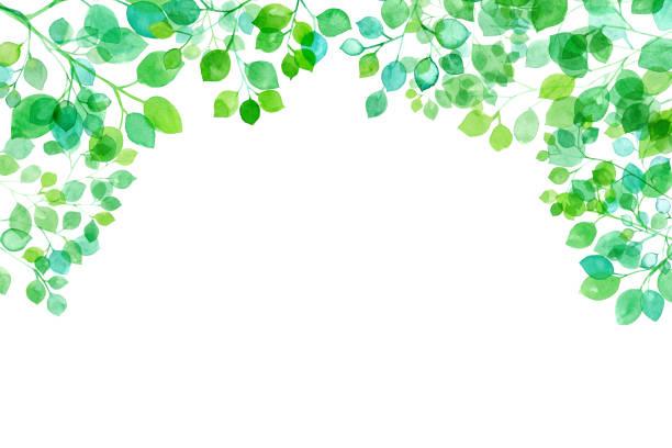 illustrazioni stock, clip art, cartoni animati e icone di tendenza di fresh green, watercolor illustration of branches and leaves shining through the sun, frame background - forest bathing