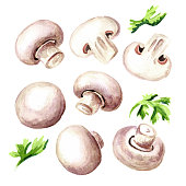 Fresh mushroom champignon with herbs set. Watercolor hand drawn illustration isolated on white  background