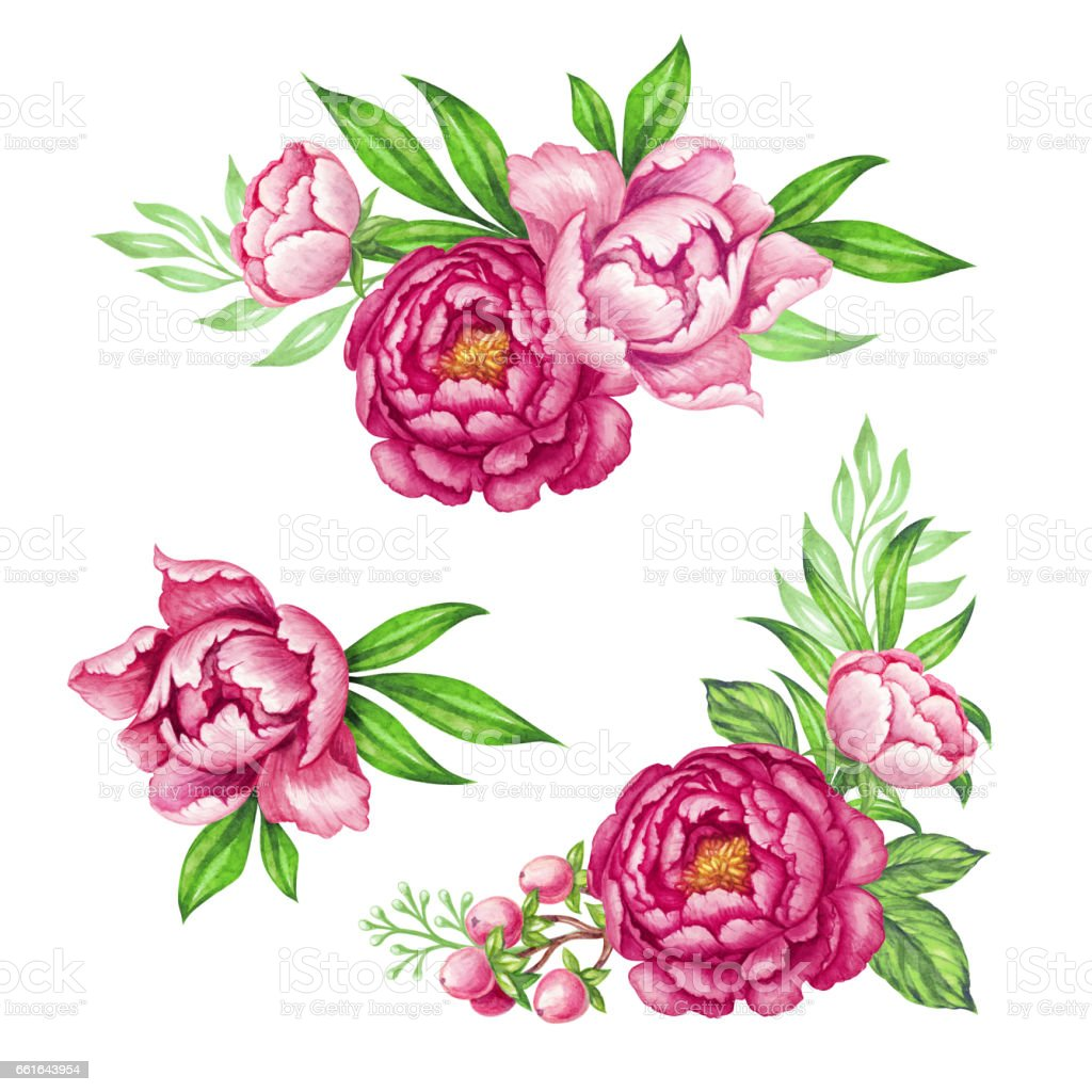 Fresh Pink Peony Garland Rose And Green Leaves Watercolor