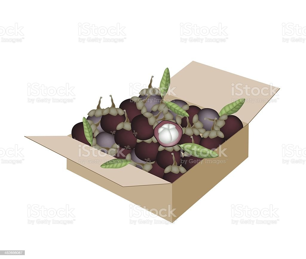 Fresh Purple Mangosteens in A Shipping Box royalty-free stock vector art