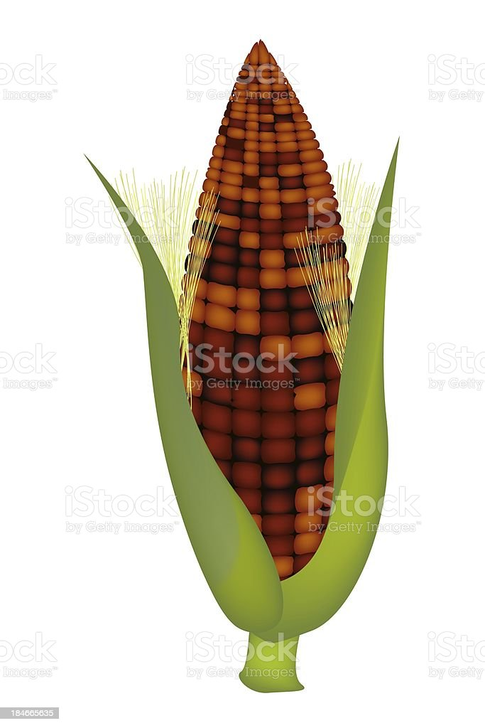 Fresh Sweet Ears of Purple Corn with Husk and Silk royalty-free stock vector art