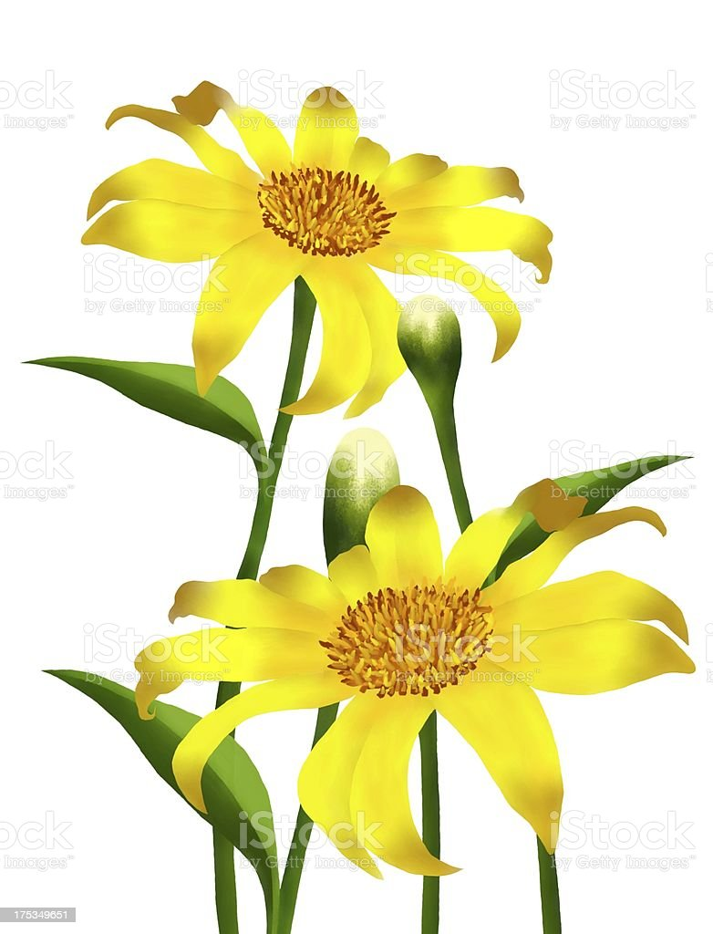 Fresh Yellow Mexican Sunflowers in Full Blossom royalty-free stock vector art