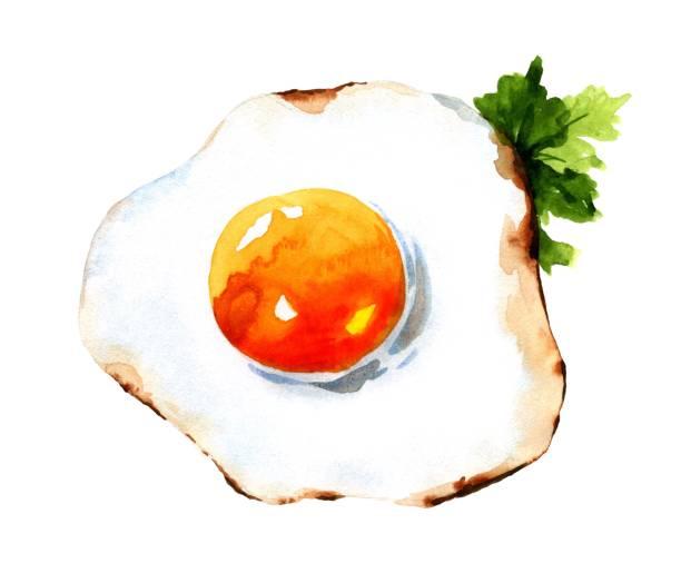 fried egg vector art illustration