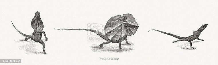 Frilled-necked lizard (Chlamydosaurus kingii). Wood engravings, published in 1898.
