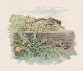 istock Frog and snail, color woodcut, published in 1897 1283058286