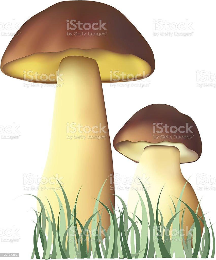 fungi royalty-free stock vector art