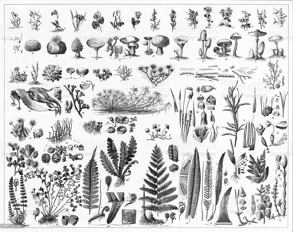 Fungi, Mushrooms, Algae and Non-Flowering Plants vector art illustration