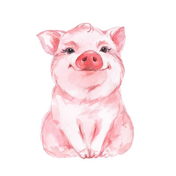 funny pig. cute watercolor illustration 1 - 돼지 새끼 stock illustrations