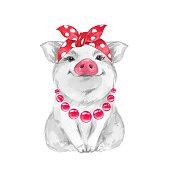 Funny pig wearing bandana. Isolated on white