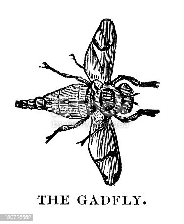 Engraving of gadfly, Gasterophilus intestinalis. In Cyclopedia of Live Stock 1882.