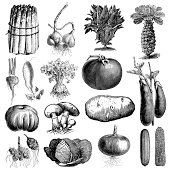 Garden Vegetable Illsutrations   Antique Farming and Food Clipart