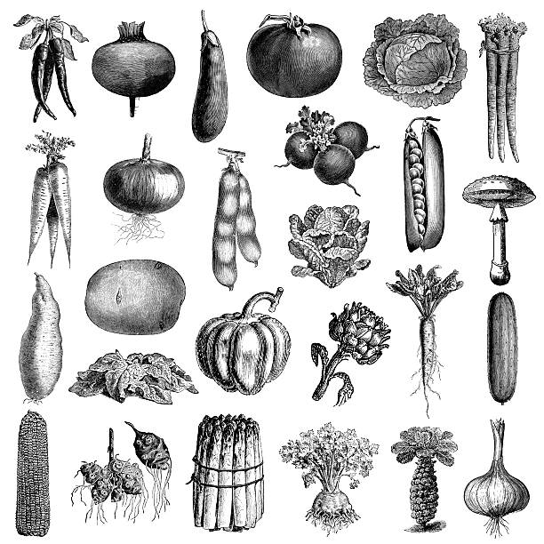 Garden Vegetable Illsutrations | Antique Farming and Food Clipart vector art illustration