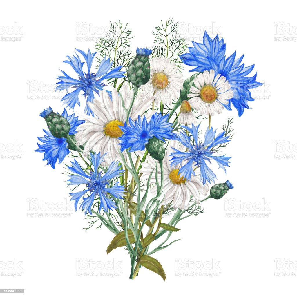 Bouquet de fleurs sauvages jardin cliparts vectoriels et plus d 39 images de aquarelle 905667144 - Bouquet de fleurs sauvages ...