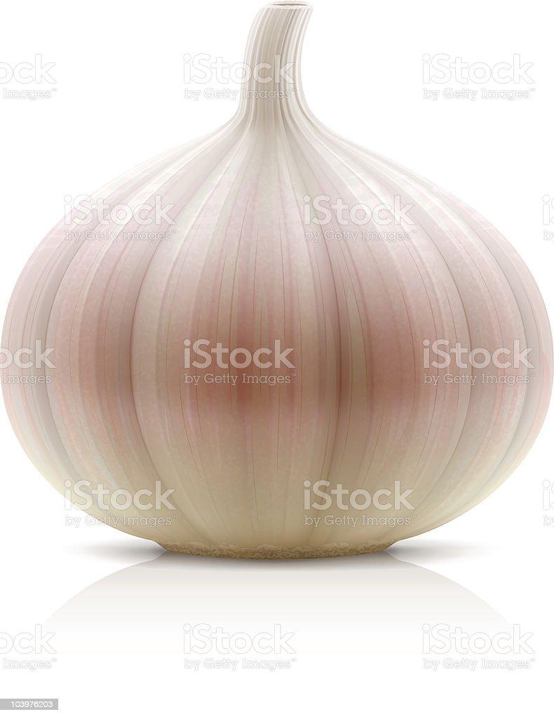 Garlic  Clip Art stock vector