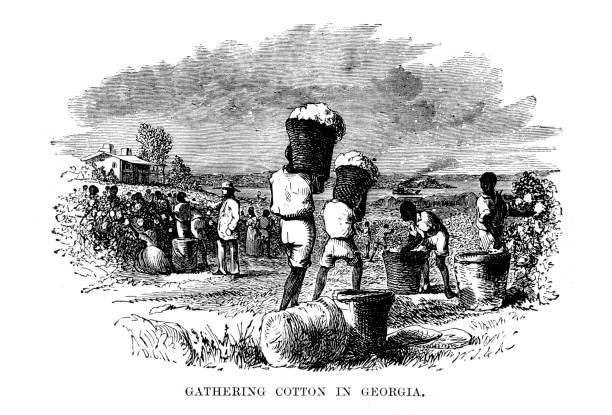 Gathering Cotton in Georgia vector art illustration