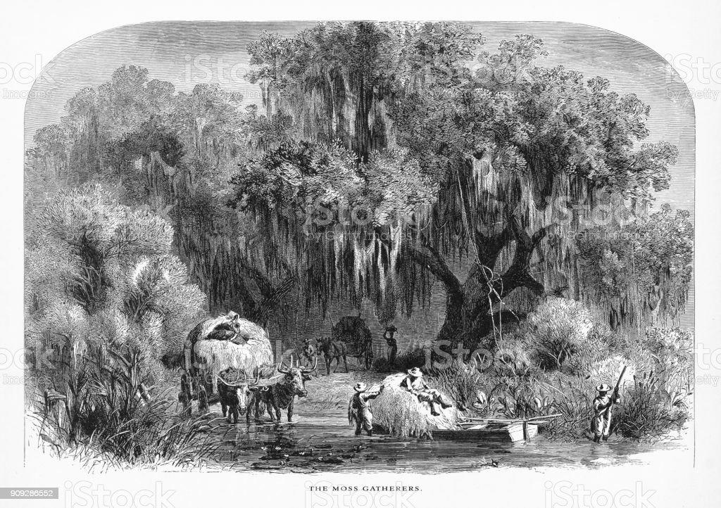 Recolha de musgo espanhol num pântano sobre o Mississippi, Louisiana, Estados Unidos, American vitoriana de gravura, 1872 - ilustração de arte em vetor