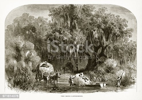 Very Rare, Beautifully Illustrated Antique Engraving of Gathering Spanish Moss in a Swamp on the Mississippi, Louisiana, United States, American Victorian Engraving, 1872. Source: Original edition from my own archives. Copyright has expired on this artwork. Digitally restored.