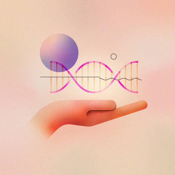 Genetic Engineering Illustration Concept Digital illustration of genetic engineering concept and gene editing. Human hand holding helix strand with abstract molecule. Made with vector vibrant color gradient geometry form. genomics stock illustrations