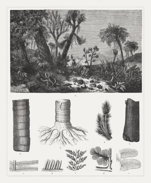 geologic period carboniferous, wood engravings, published 1894 - fossilized leaves stock illustrations