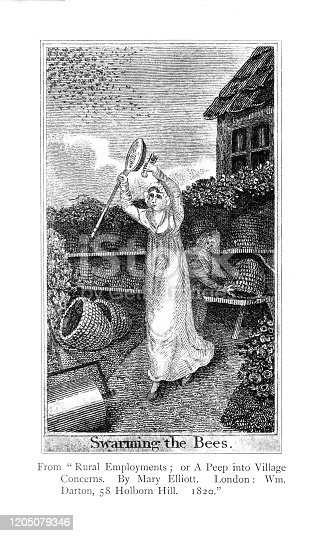 istock Georgian engraving lady chasing bees with net taken from Forgotten Children's Books 1898 1205079346