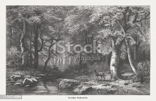 German beech forest. Wood engraving, published in 1894.