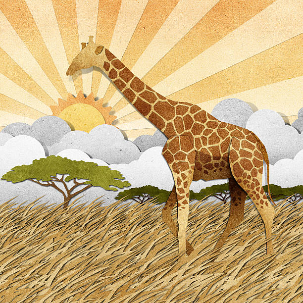 bildbanksillustrationer, clip art samt tecknat material och ikoner med giraffe  in safari field recycled paper background - single pampas grass