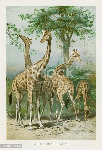 The Royal Natural History by Richard Lydekker, London - Frederick Warne & Co and New York 1896