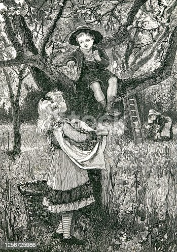 Girl and boy in the orchard, harvesting
