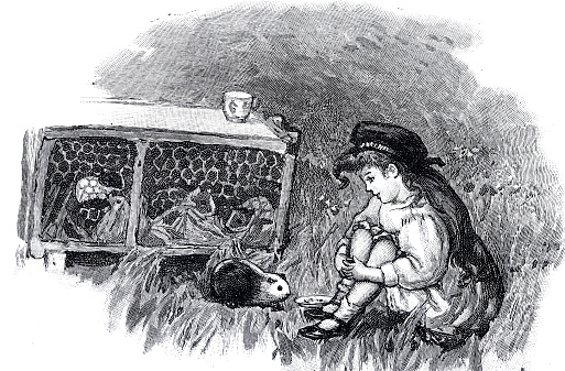 Girl sits at the guinea pig hutch