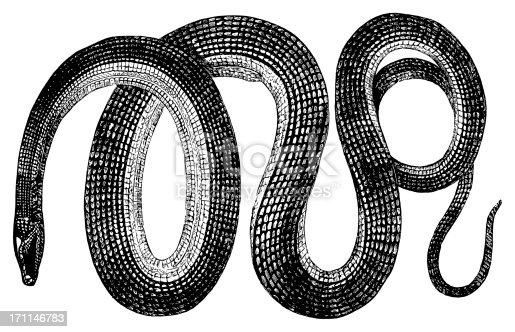 19th-century engraving of a glass snake (isolated on white). Published in Systematischer Bilder-Atlas zum Conversations-Lexikon, Ikonographische Encyklopaedie der Wissenschaften und Kuenste (Brockhaus, Leipzig) in 1844.CLICK ON THE LINKS BELOW FOR HUNDREDS MORE SIMILAR IMAGES: