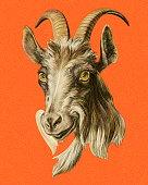istock Goat 1328221859