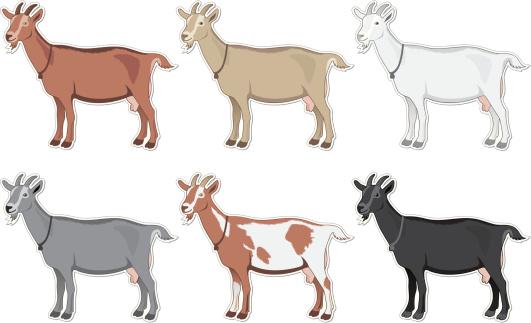 Goats Color Set