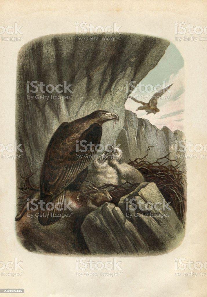 Águila real grabado 1880 - ilustración de arte vectorial