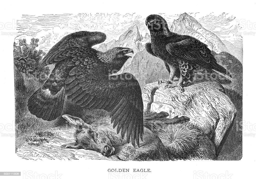 Águila real - ilustración de arte vectorial