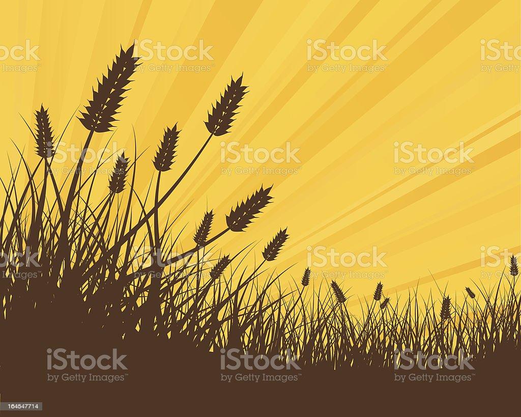 Golden Wheat royalty-free stock vector art
