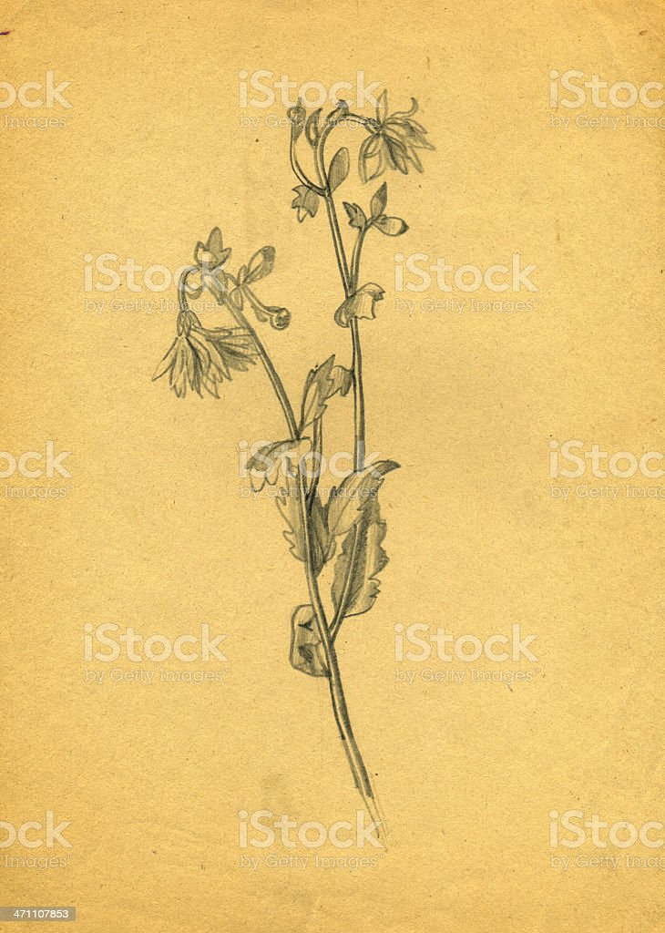 Golden-daisy royalty-free goldendaisy stock vector art & more images of abstract
