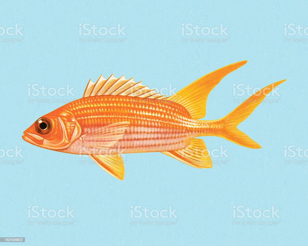 Goldfish vector art illustration