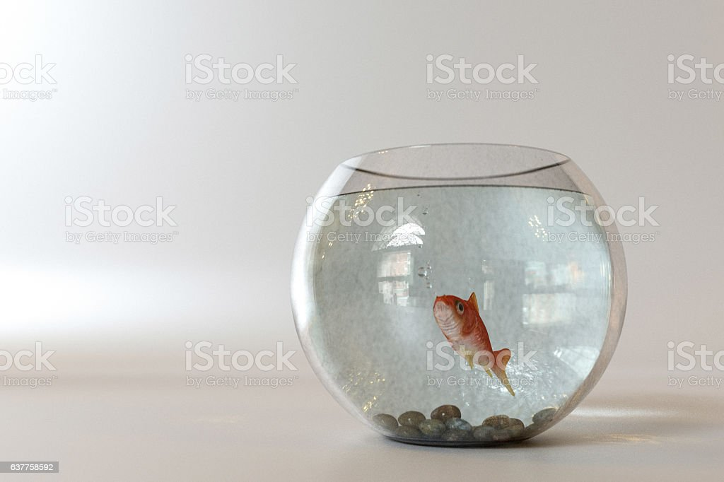 Goldfish into a fishbowl vector art illustration