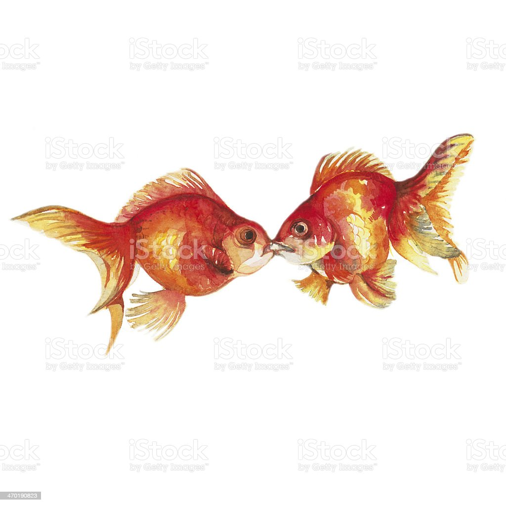 Goldfish kissing. vector art illustration