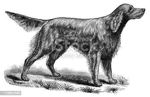 Dog engraving from