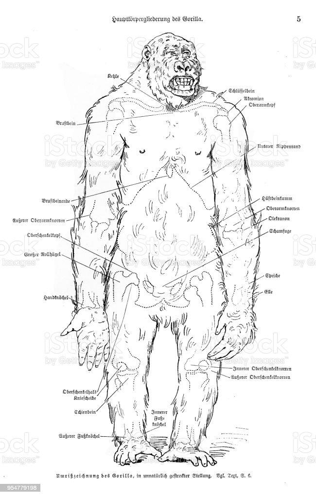Encantador Anatomie De Abusos Philip Stubbes Molde - Imágenes de ...